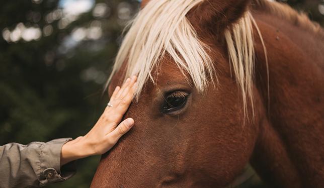 Le cheval : un allié dans la guérison des blessures psychologiques.